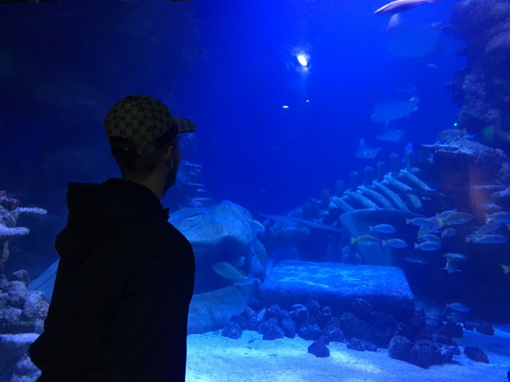SeaLife_2